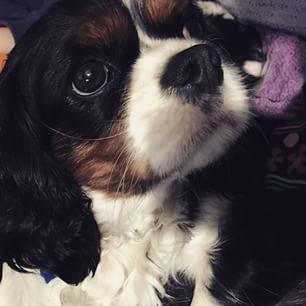 puppy guinness