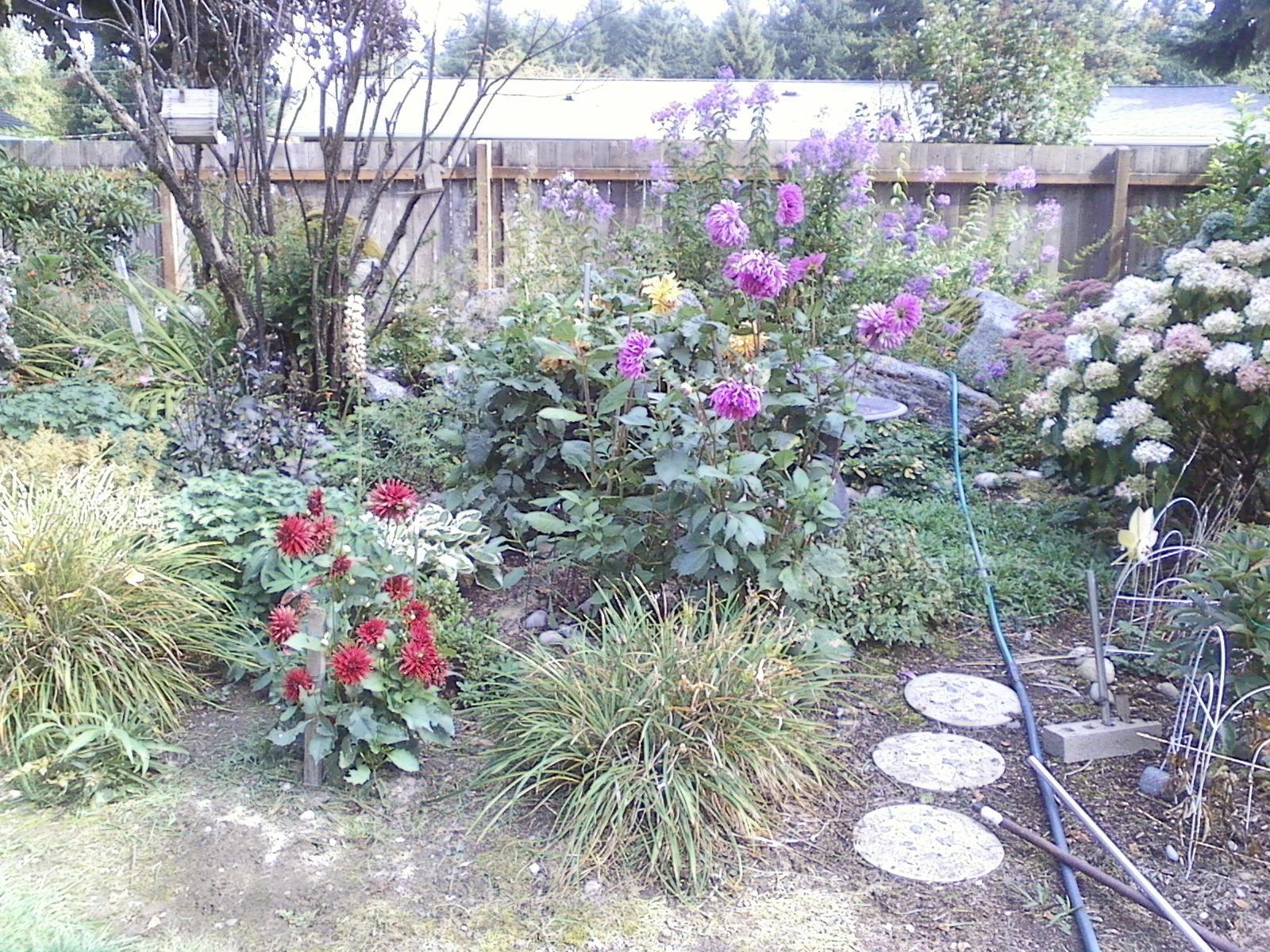 Backyard refuge