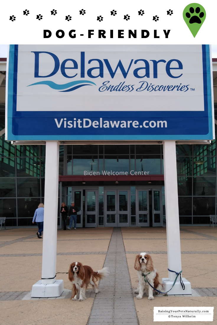 Dog Friendly Wilmington Delaware Road Trip Dog Friends Dog
