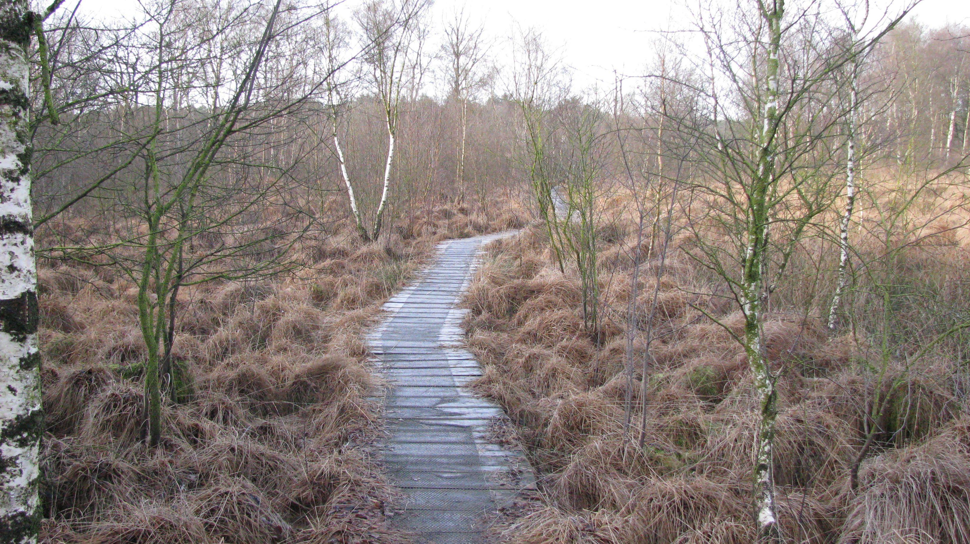 Winter bij Orvelte Drenthe