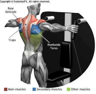 SHOULDERS - CROSSOVER STANDING CABLE MACHINE | Exercises - Back ...