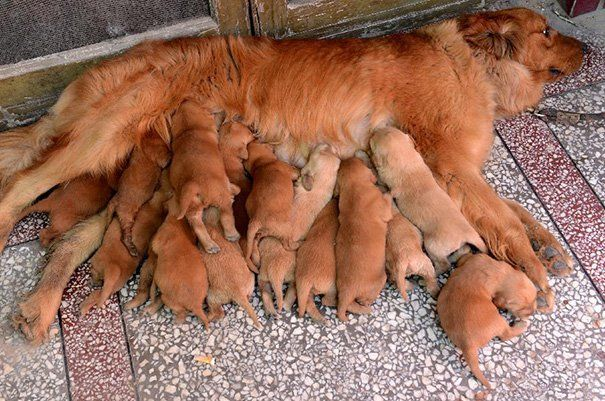15 Proud Dog Mommies With Their Puppies Will Melt Your Heart, Guaranteed! #3- OMG! | Superstar Lifestyle