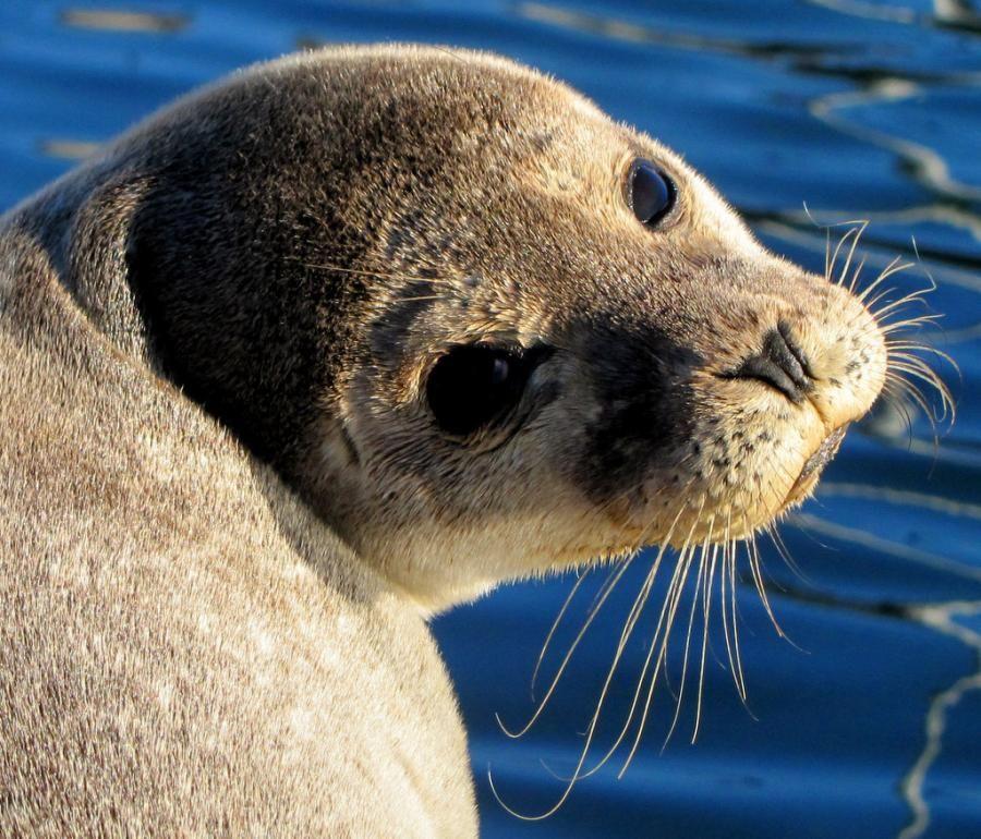 Seal sunbathing in dingle Animal antics, Animals, Cute