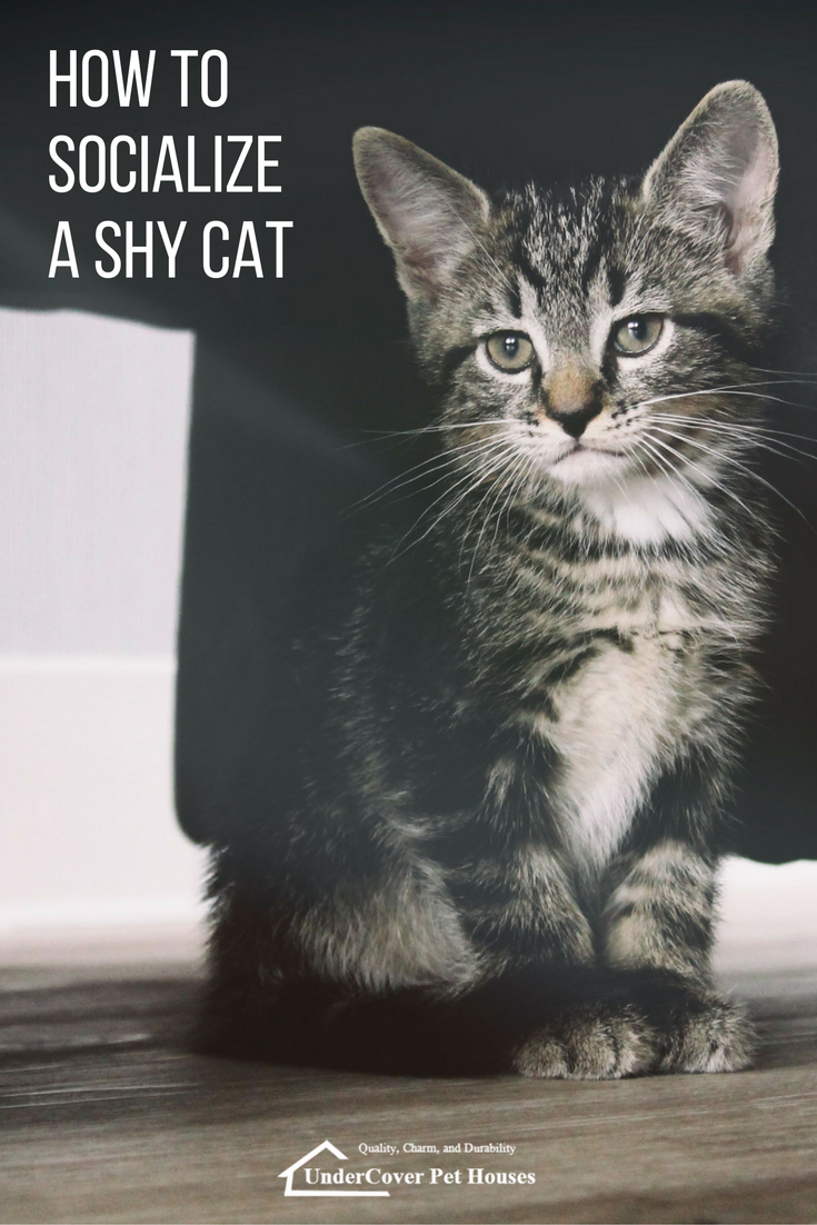 How To Socialize A Shy Cat Cat Training Feral Kittens Cats