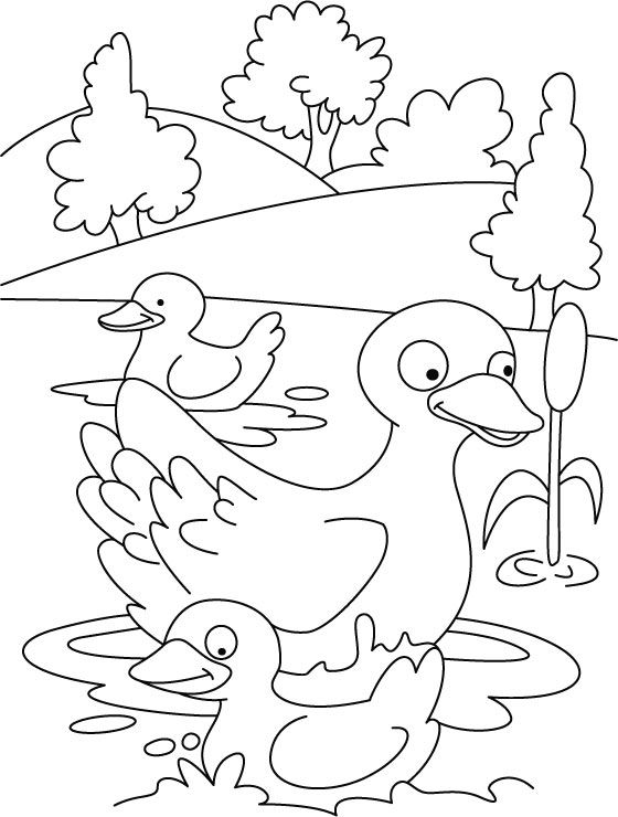 duck and duckling mother duck and her ducklings coloring page