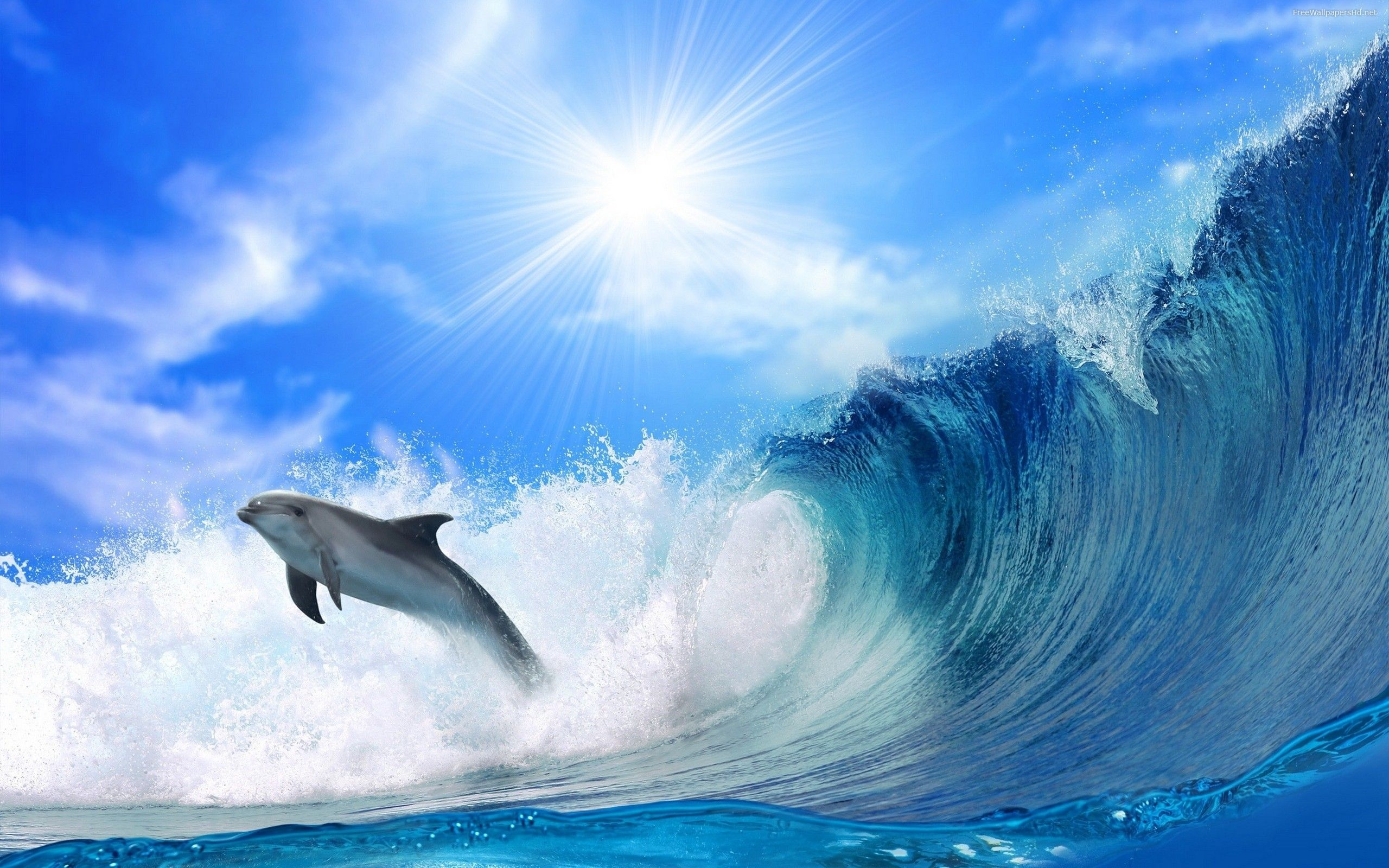 Dolphins Jumping In The Sea Widescreen Free Wallpapers Hd 2010 2011