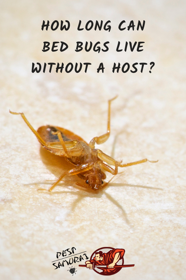 How Long Can Bed Bugs Live Without A Host Bed bugs