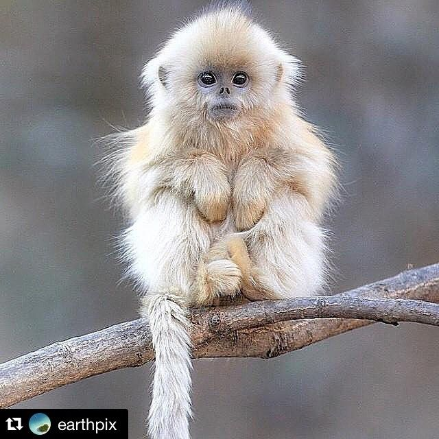 Well, hello cutie!! #earthlings  #Repost @earthpix with @repostapp. ・・・ Adorable monkey   Via @OutOfWild   Photography by @Kai_Lenny