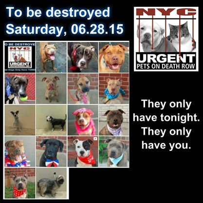 To Be Destroyed 06 28 14 Pitties Are In Danger Again There Are