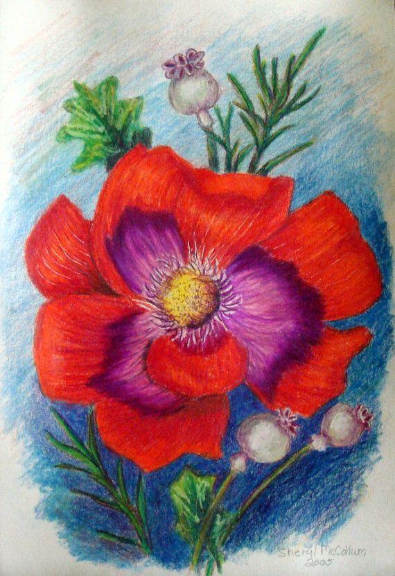 flower colour pencil sketches - photo #12