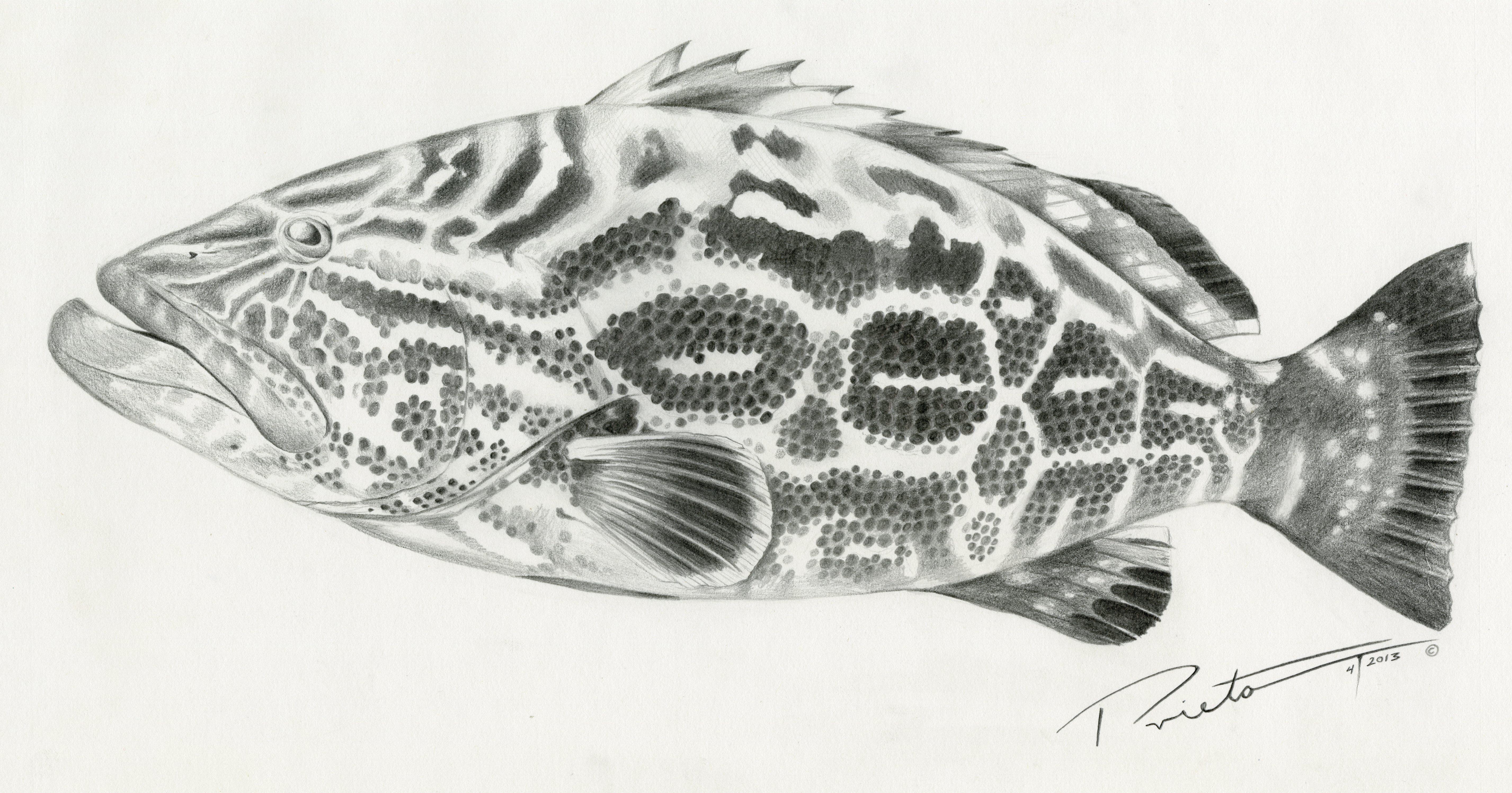 Black Grouper Tatuagens Peixes Braco