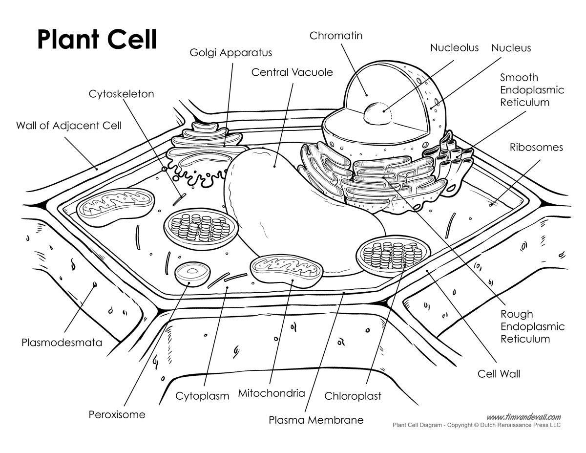 Plant and Animal Cell Diagrams | Plant Cell Vs Animal Cell ...