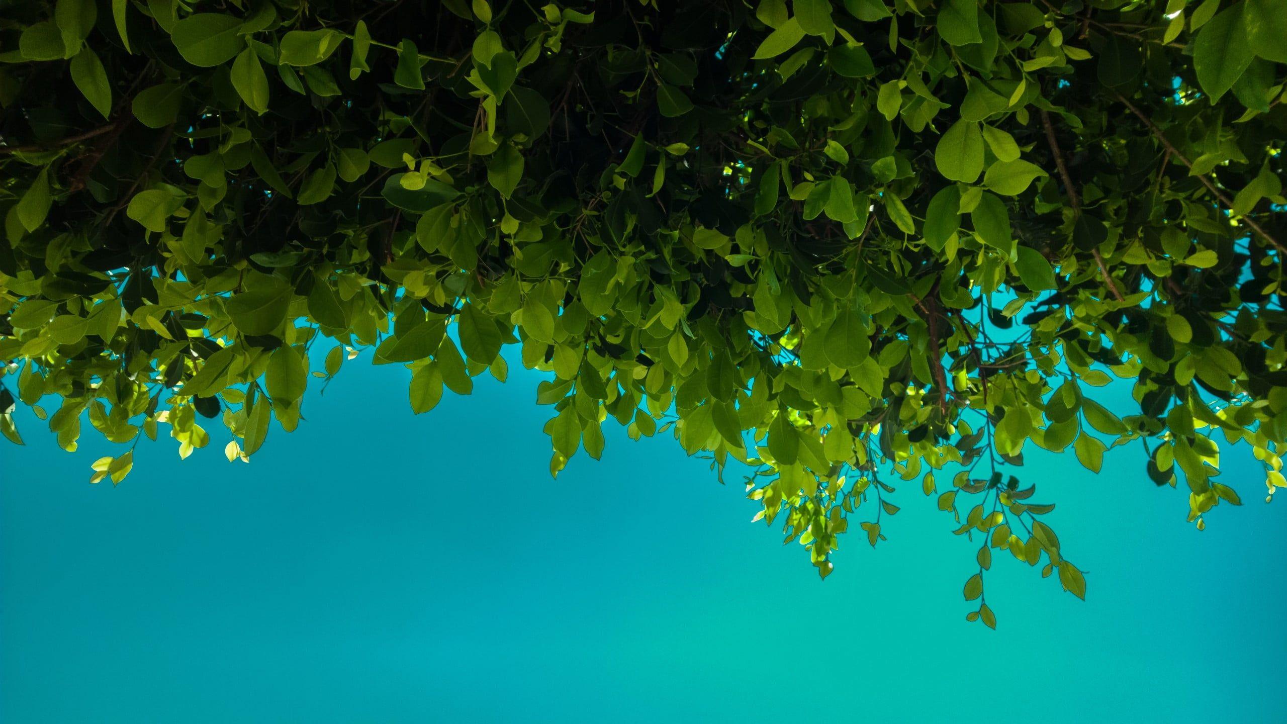 green leafed plants green leaves blue nature 2K