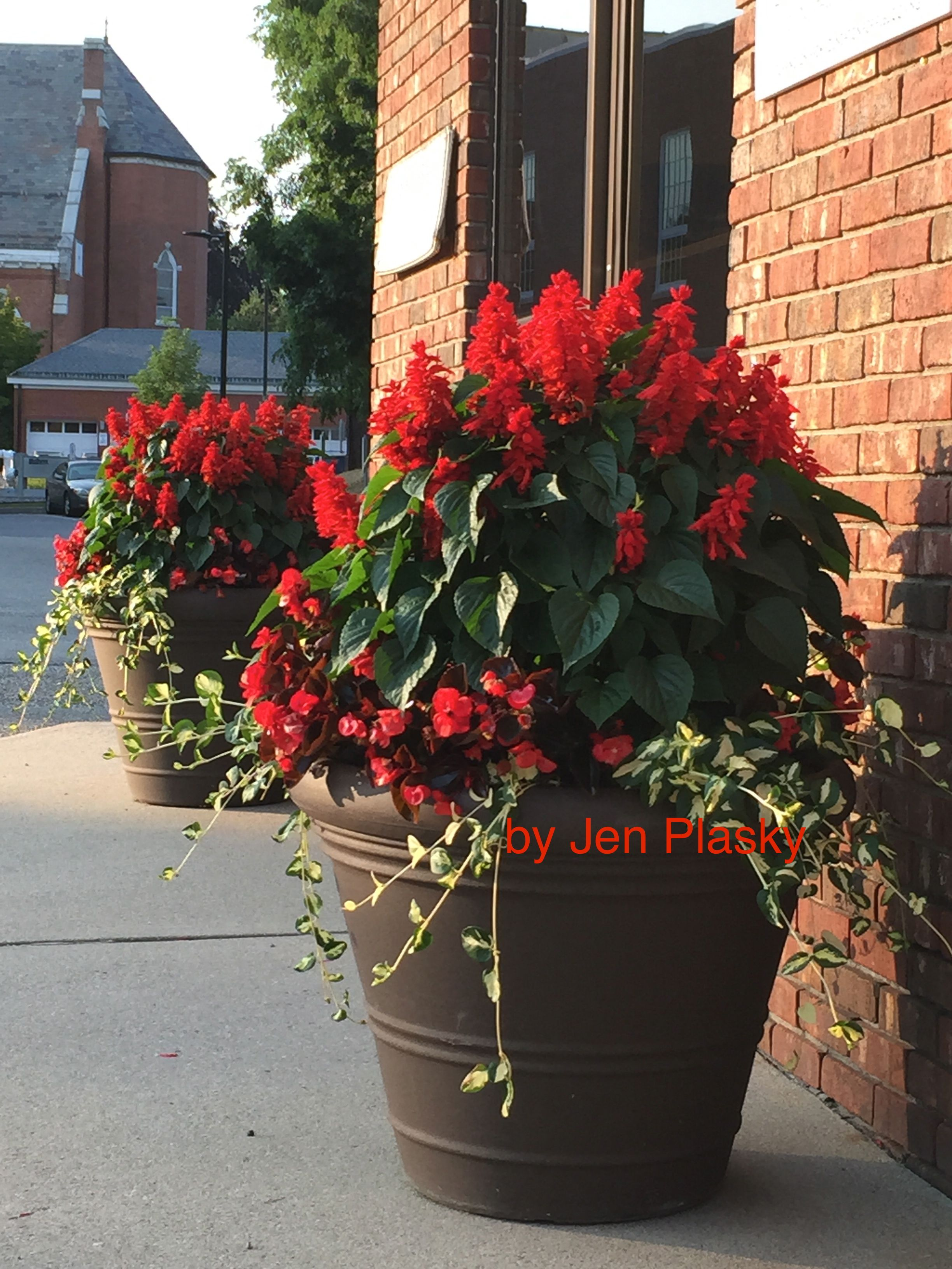 Salvia Wax Begonia Vinca Vine Potted Geraniums Country Garden Decor Container Flowers