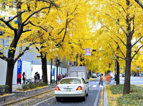 đại lộ midosuji
