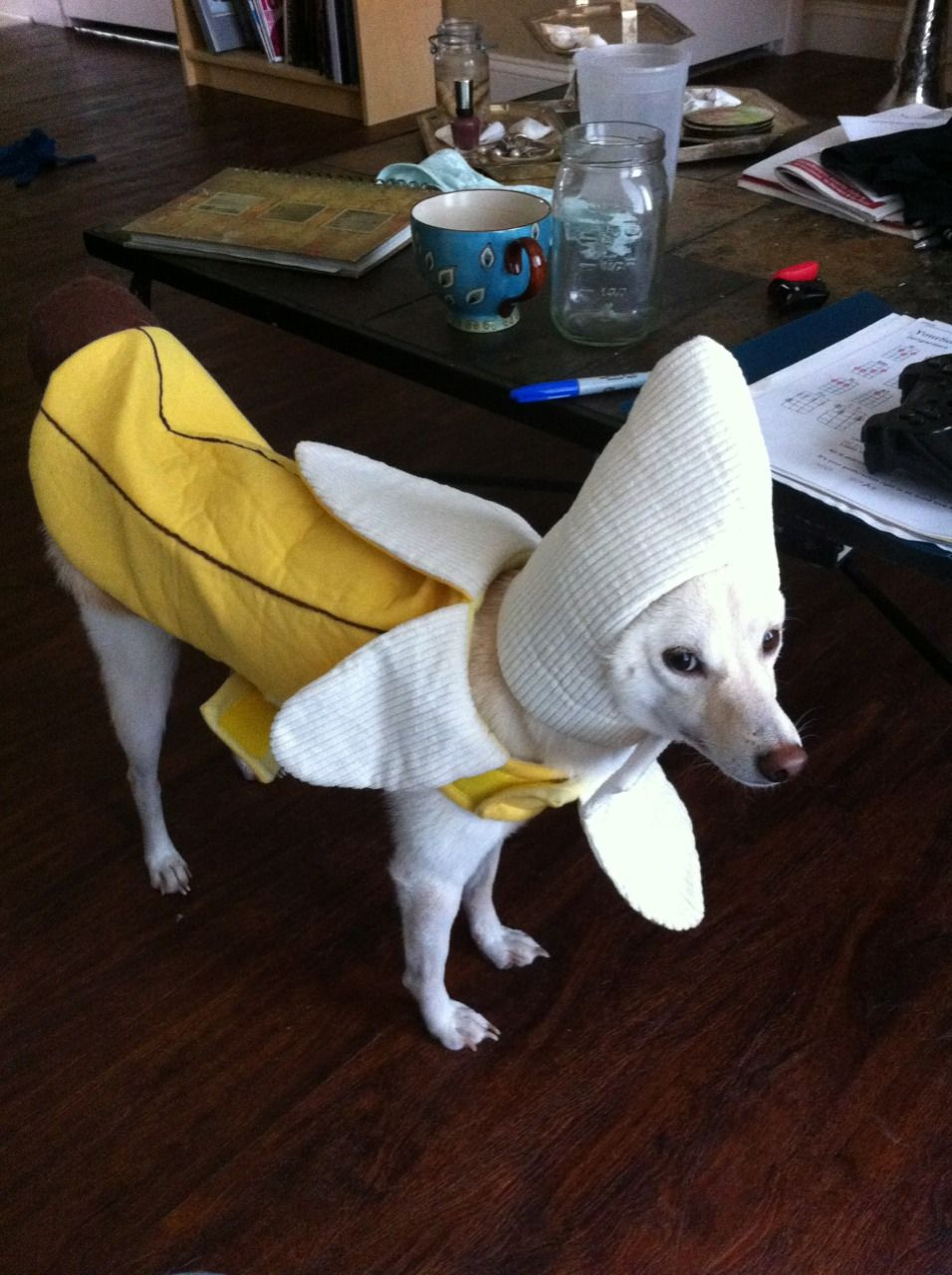 The Best Thing I Ever Bought Was A Banana Costume For My Dog