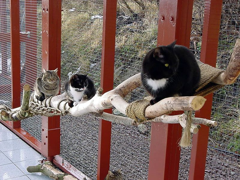 gotts cattery.  So cool!!  My dream is to open a cat sanctuary.  Cat Rescue!