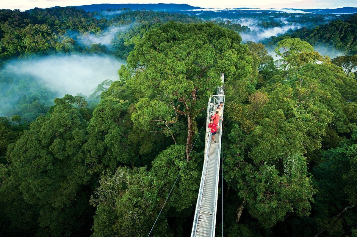 Canopy walkways, also known as treetop walks, provide pedestrian access to the forest canopy, and they can be defined as a series of bridges that spread through the forest. Originally these suspended pathways were constructed for scientists in order to gain access to the upper sections of ancient forests to conduct research.