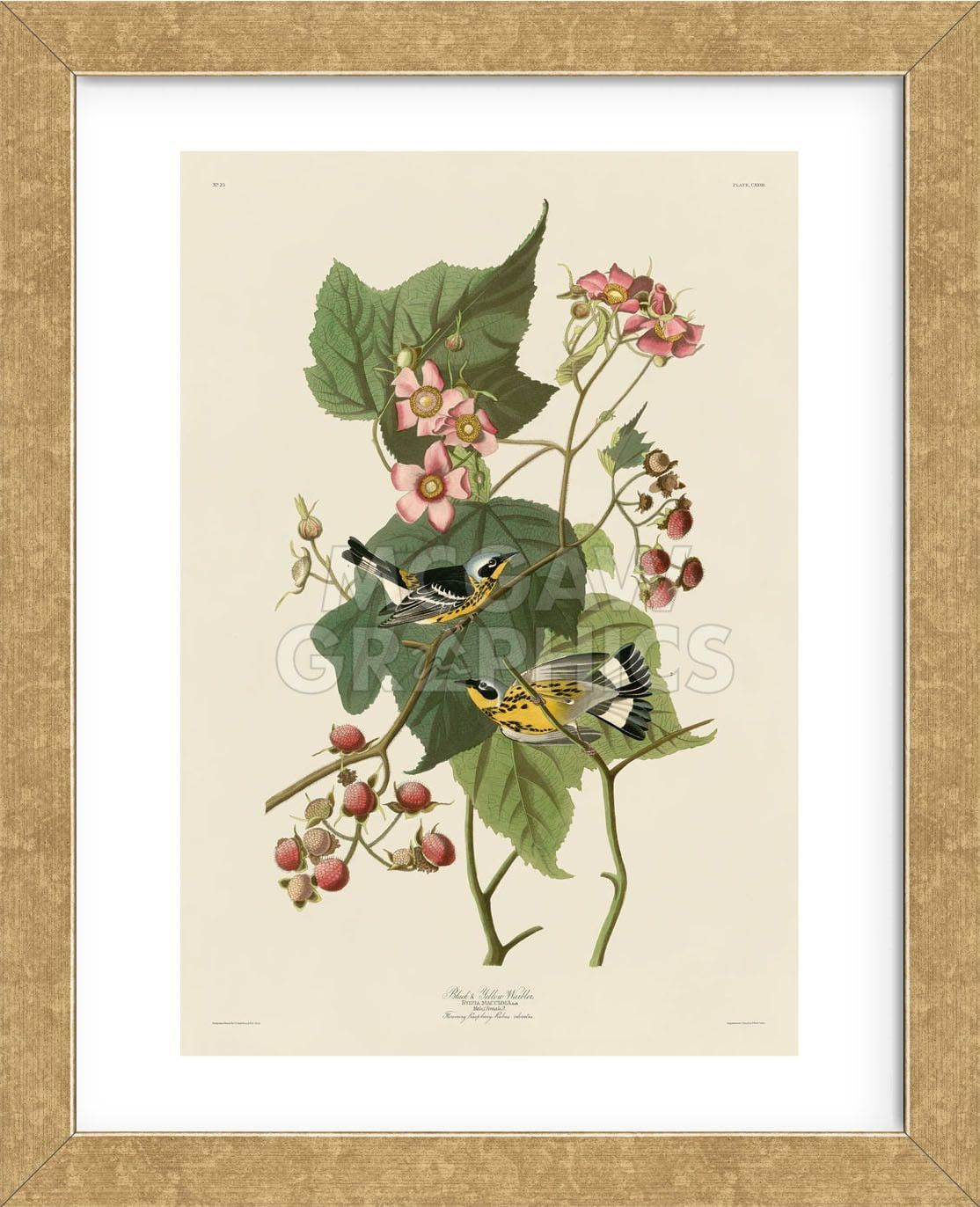 Black & Yellow Warblers (Framed)