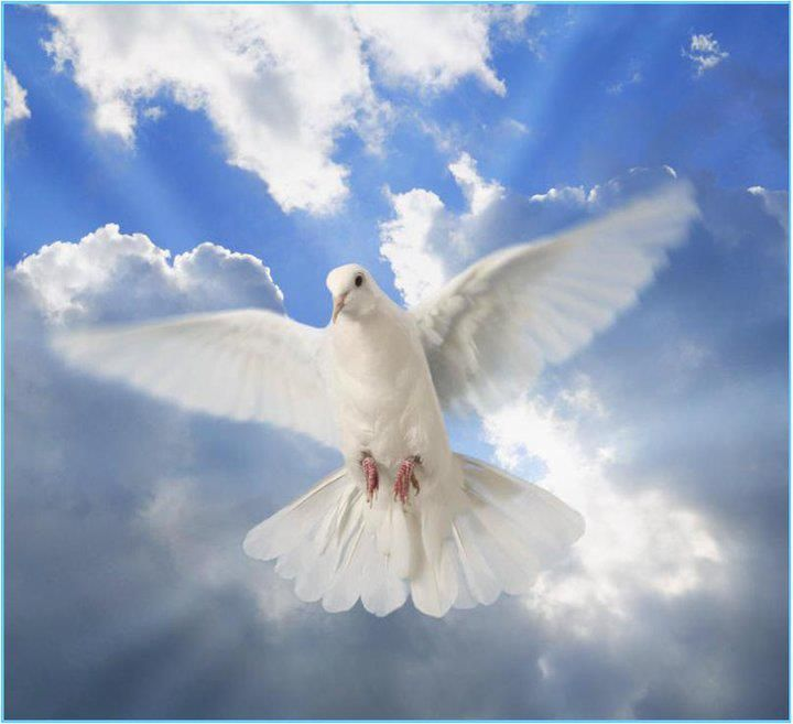 Jesus also was baptized and, as he was praying, the heaven was opened up and the  holy spirit in bodily shape like a dove came dow… | Holy spirit, White doves, Bird
