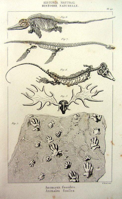 1852 Paleontologie Antique Imprimer Squelette De Plesiosaurus Ichthyosaurus Vintage Gravure Plaque De Pistes Fossiles Paleontology Prehistoric Antique Prints
