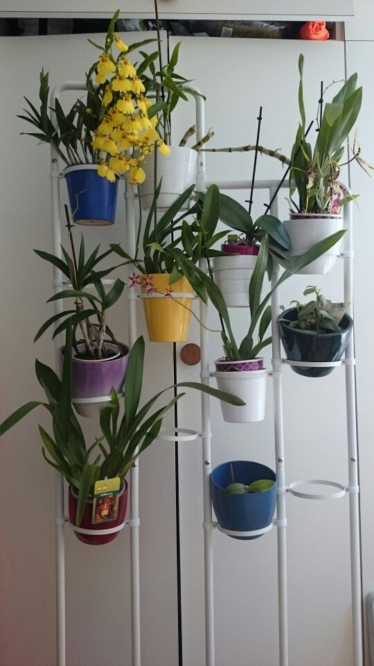 My Orchid Plant Stand Ikea Socker Now I Can Have More Orchids In Front Of The Window D