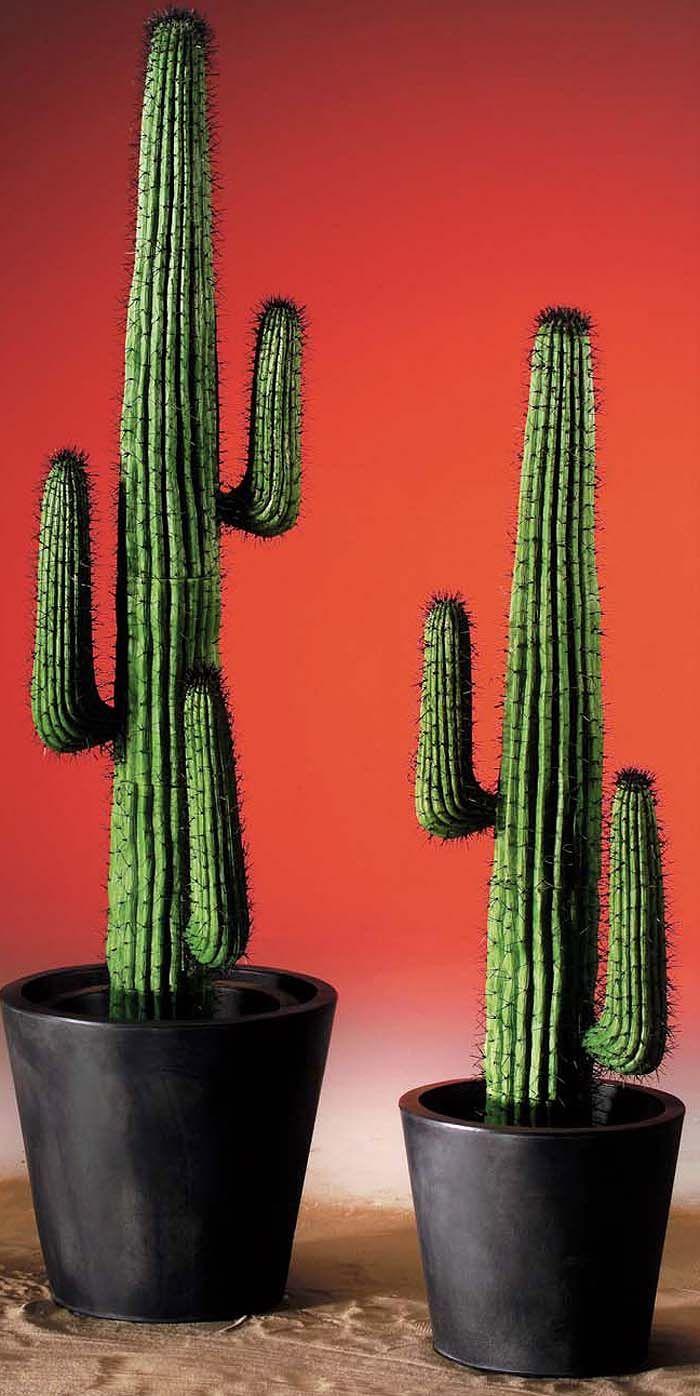 cactus alto - Buscar con Google