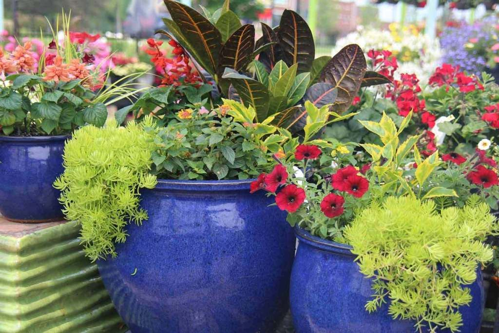 Tips For Planting In Large Planters Using Less Soil  is part of Large garden planters, Large plant pots, Large flower pots, Potted plants outdoor, Large garden pots, Large planters - I am happy to share some tips for planting in large planters, by using less soil, and reducing the overall weight of the planter