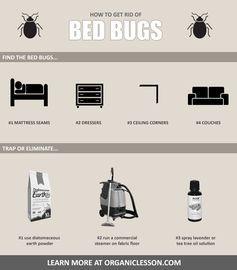 5fdc3f26b4de6be4e297c45e3cfb8a44 - How To Get Rid Of Insects In Rice Bag