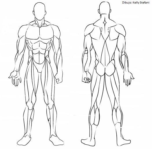 Dghjjhgfmusculos Jpg 525 513 Musculos Del Cuerpo Humano Cuerpo Humano Dibujo Dibujo Musculos