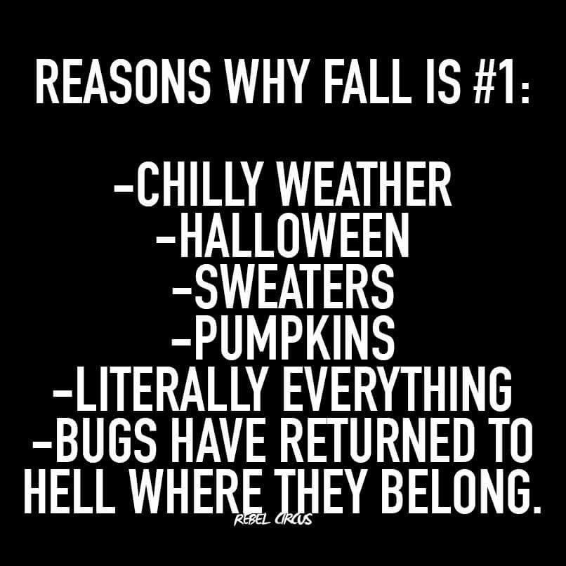 Lol This Is Amazing Autumn Quotes Fall Fun Fall Memes