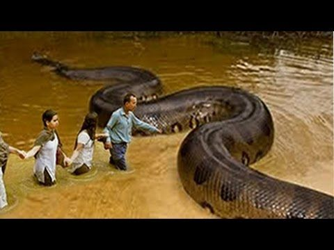 Wow Brave Man Catch Big Snake Along The Road How To Dig And Catch