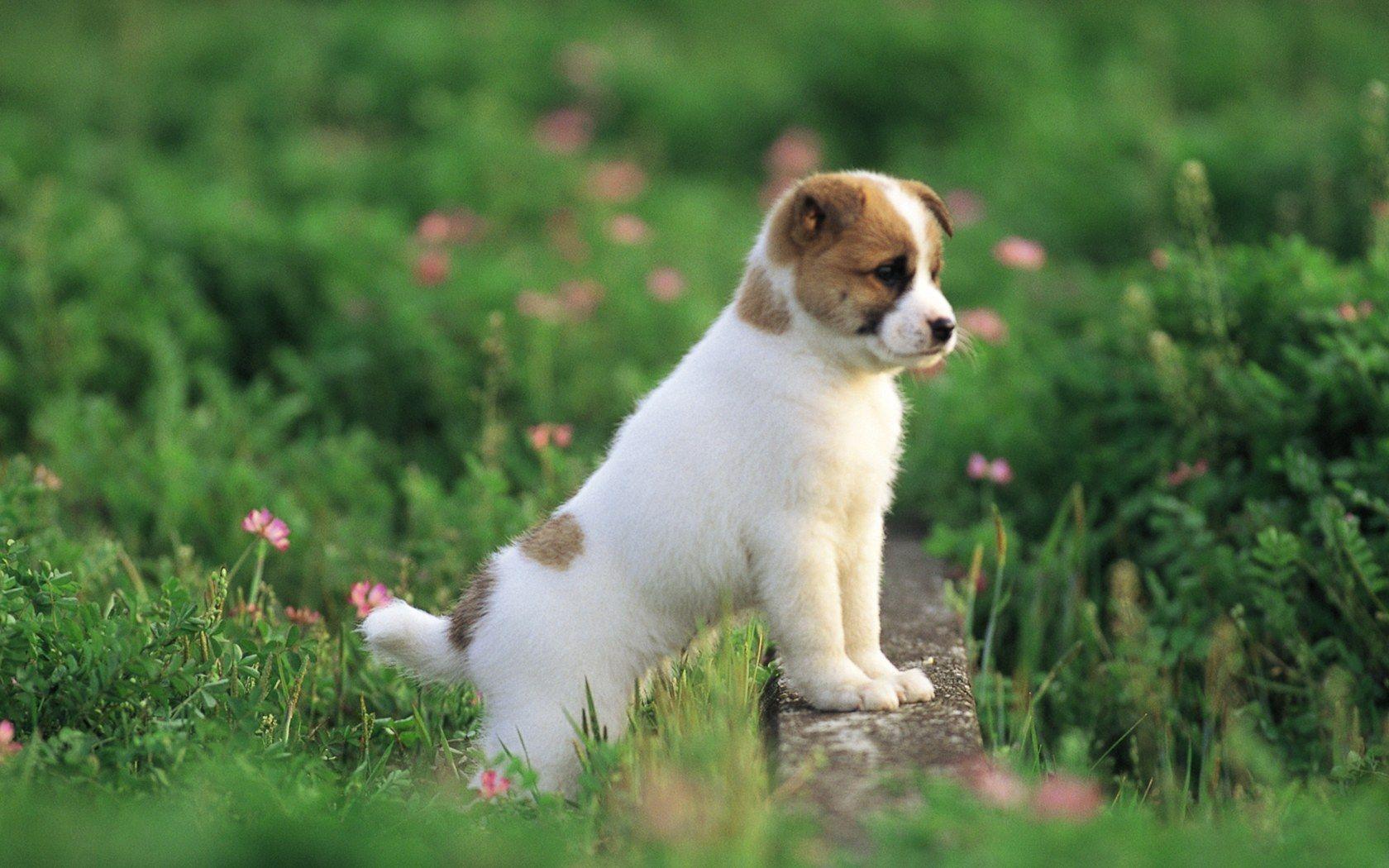 high resolution Cute Puppy In A Park Puppy Dog Grass