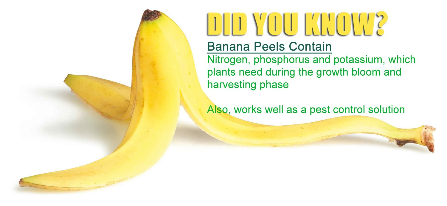 Image result for banana peels for plants""