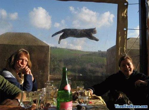32 Juuri oikeaan aikaan otettua valokuvaa kissoista