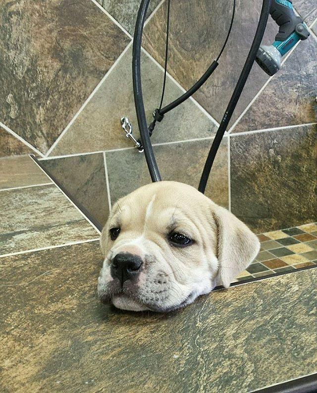 Instagram Photo By Pet Valu U S Jun 22 2016 At 3 52pm Utc Pets Photo Instagram Posts