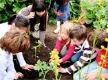 Giving Back: Seeds of Change  $10,000 grants to support community based gardening and farming