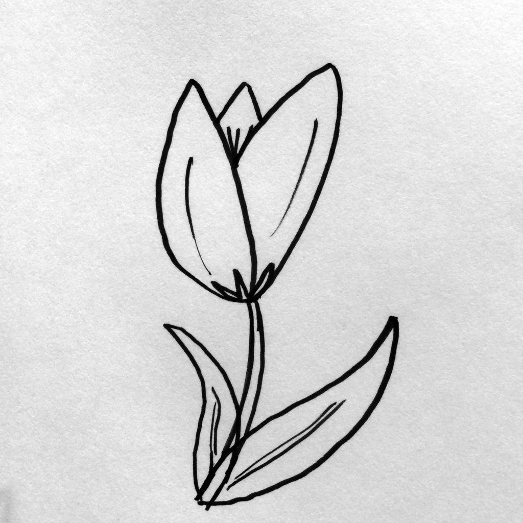 Simple Steps For Drawing Flowers Bible Pictures Pinterest