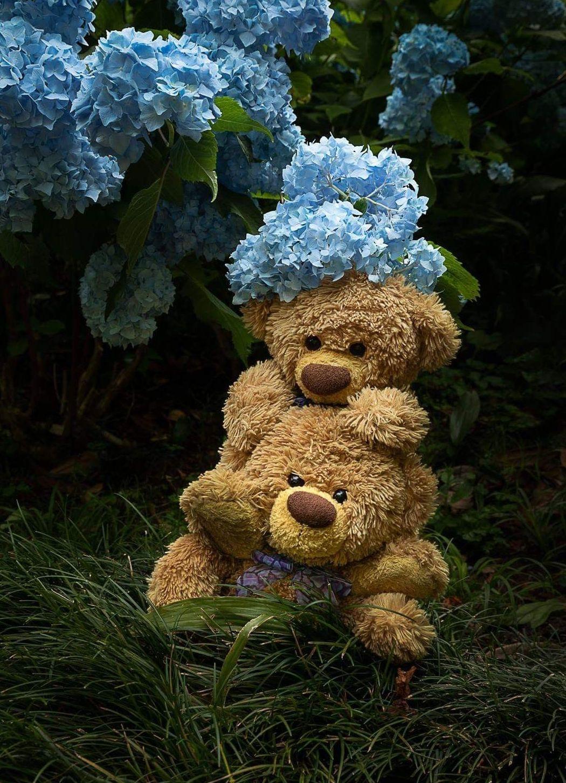 Petit Ourson D Amour Teddy Bear Pictures Teddy Bear Wallpaper Teddy Bear Doll