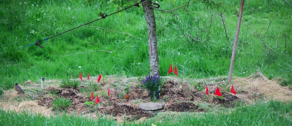 apple tree planting instructions