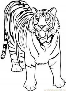Printable Tiger Pictures To Color Zoo Animal Coloring Pages Animal Coloring Pages Tiger Drawing For Kids