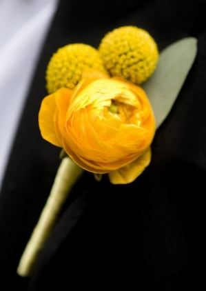 yellow rananculus and billy balls wedding flower boutonniere, groom boutonniere, groom flowers, add pic source on comment and we will update it. www.myfloweraffair.com can create this beautiful wedding flower look.