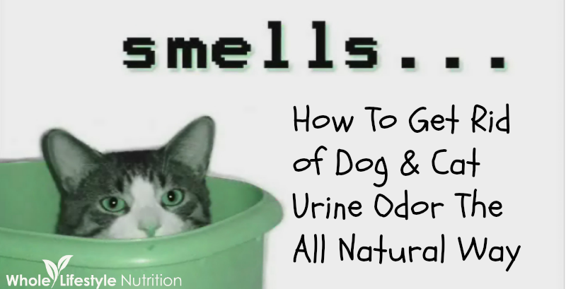 Get Rid of Dog and Cat Urine Odors The All Natural Way! - Whole Lifestyle Nutrition