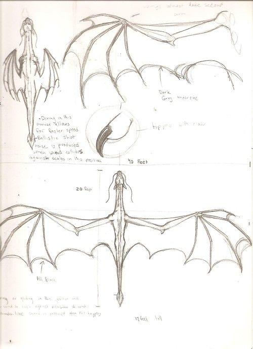 dragon anatomy | Tumblr | everything dragon | Pinterest | Drachen ...