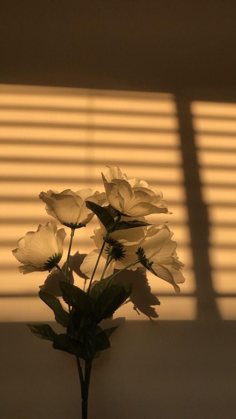 sunlight afficher photos fond d