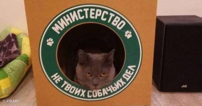 30фотографий, которыми коты могут гордиться