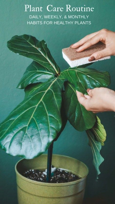 Creating a houseplant care routine Its so important to care for your plants on a regular schedule whether youre watering fertilizing or dusting leaves its important to be...