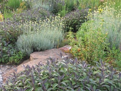 Currykraut (Helichrysum) und Salbei (Salvia officinalis)