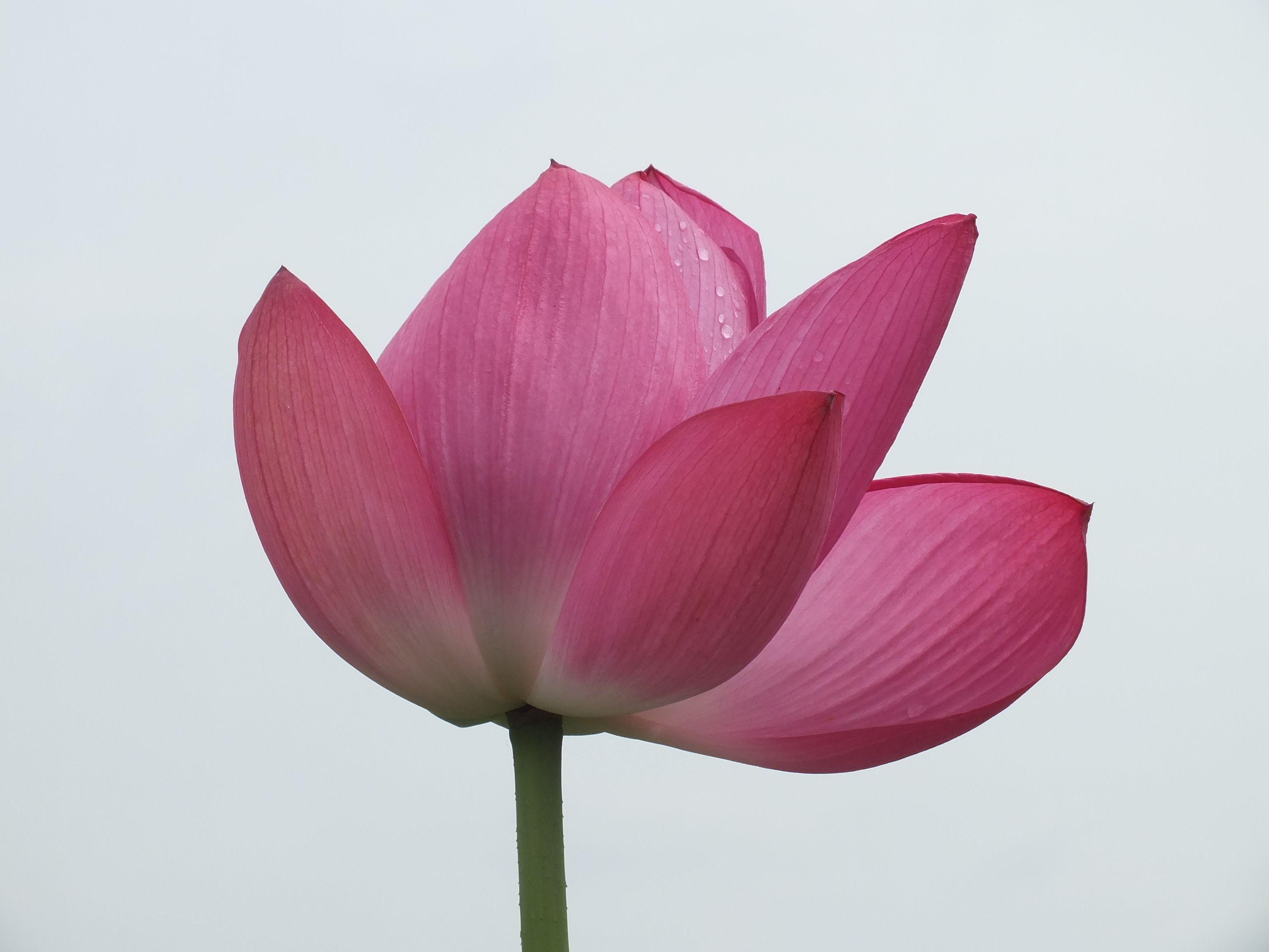 森川花はす 4