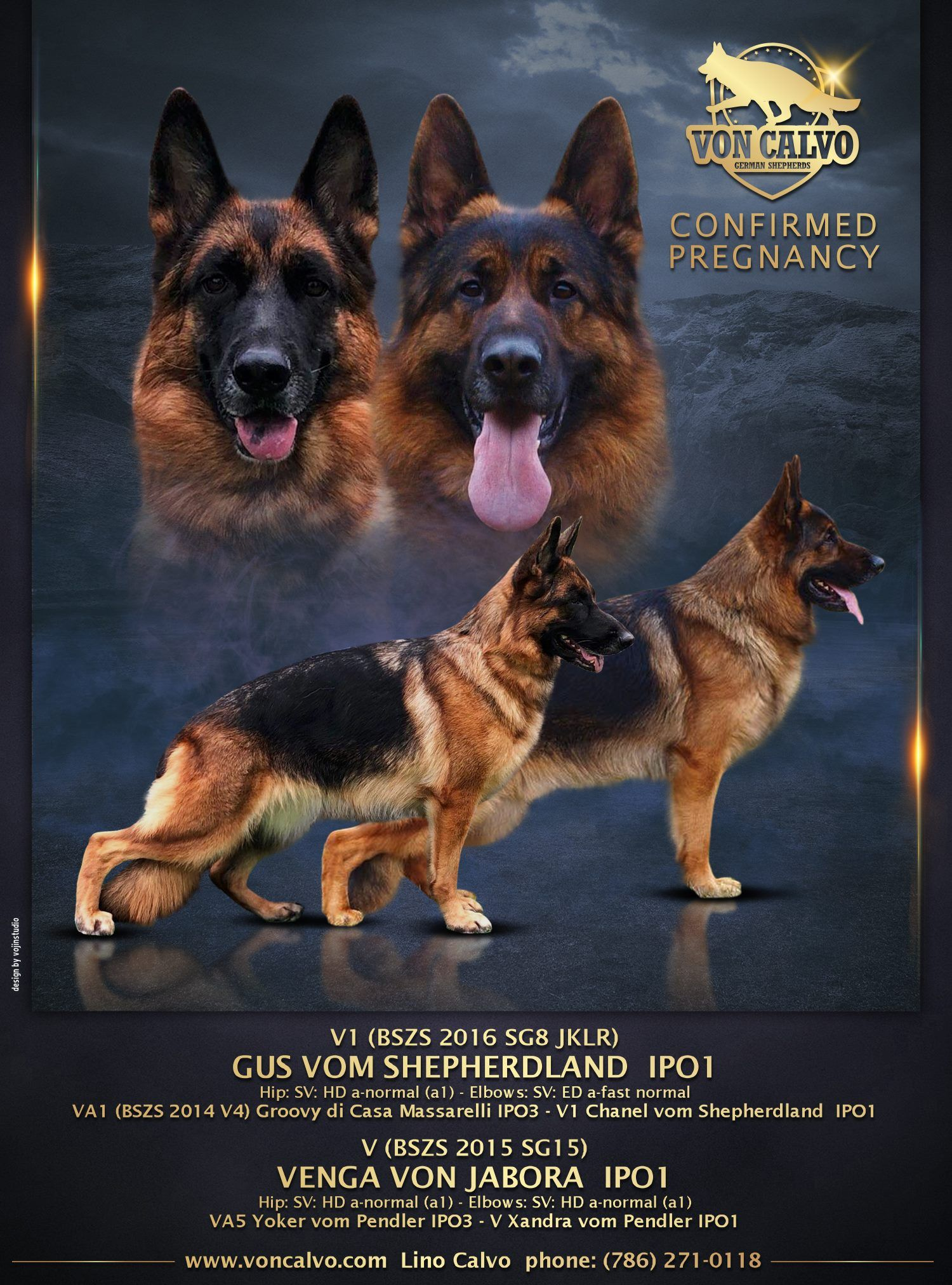 Von Calvo German Shepherds German Shepherd Breeders German Shepherd Shepherd